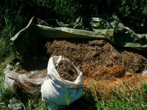 Filling the manure tea bags.