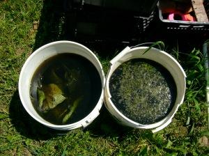 Comfrey and Nettle tea