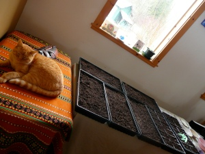 Pickles Overseeing the First Seed Planting of the Year