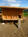 Completed mobile chicken coop #1 for the non-conformist chickens