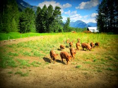 Life as a Rootdown Pig. 19 social, smart additions to our pastures