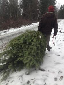 Christmas Tree hunting turns up success
