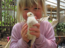 Chick snatcher