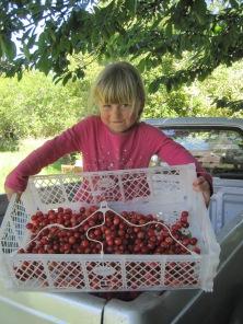 Cherry season!