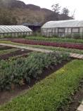 Garden at PNP